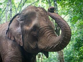 ecoturismo-elefanti